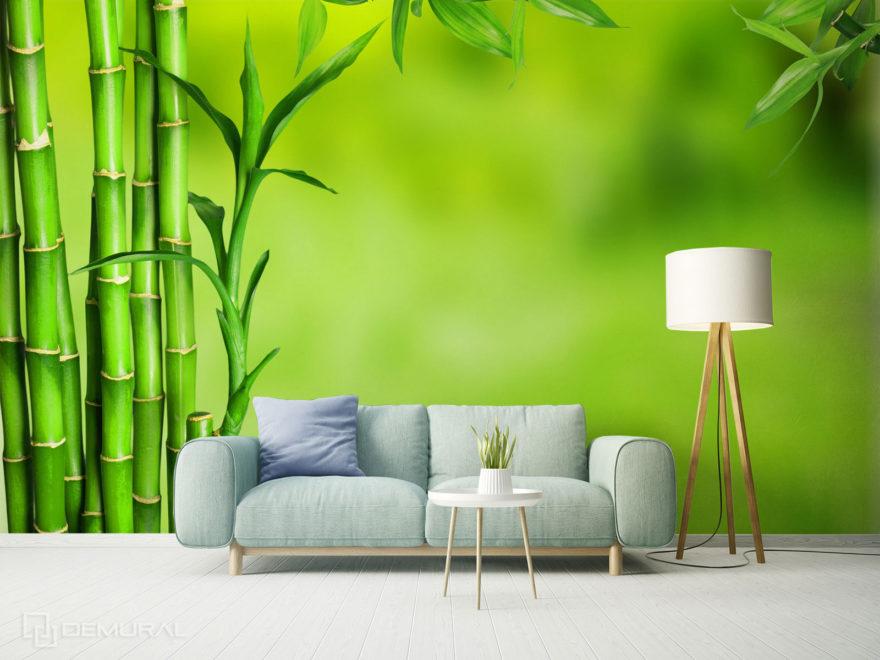 Fototapety bambus - Demural